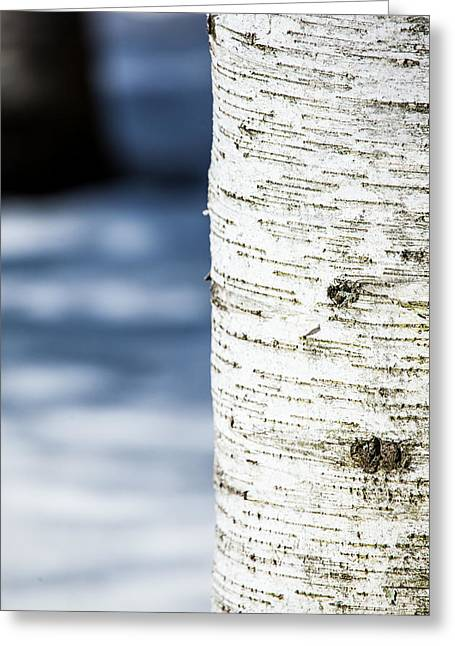 White Snow On Trees Greeting Cards - White Birch Abstract Greeting Card by Karol  Livote