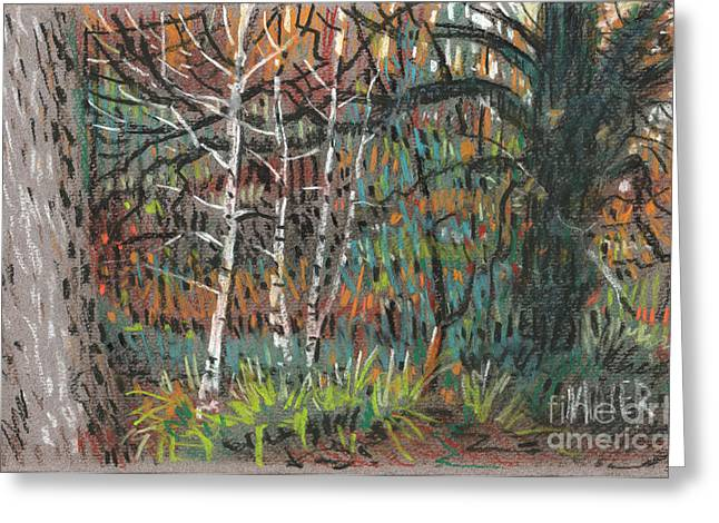 Autumn Pastels Greeting Cards - White Birch Greeting Card by Donald Maier