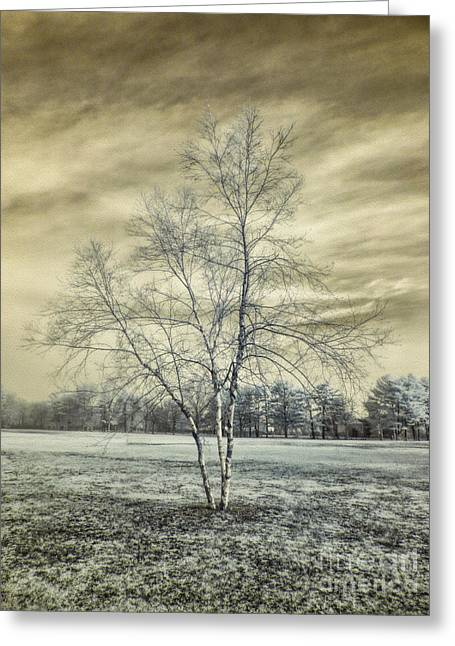 White Birch In Cantiague Park Greeting Card by Jeff Breiman