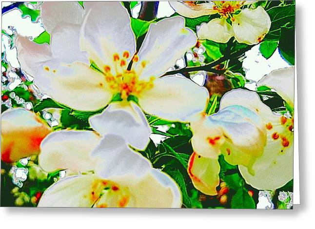 Digitalized Photograph Greeting Cards - White Blossoms  Greeting Card by Beth Akerman