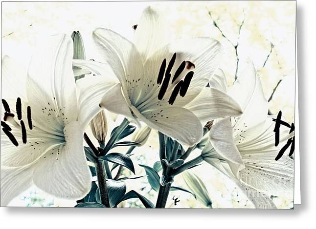 Fragrant Greeting Cards - White blue Greeting Card by SK Pfphotography