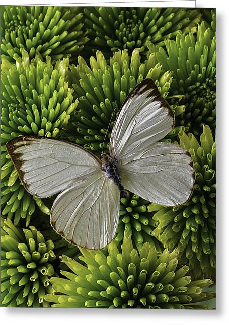 Fresh Green Greeting Cards - White Butterfly On Green Poms Greeting Card by Garry Gay