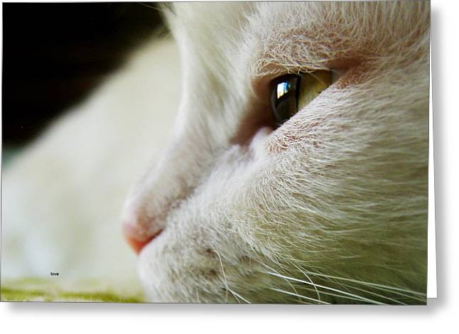 Dogs Digital Greeting Cards - White Cat Nube I am Perfect Greeting Card by Miss Pet Sitter Maria