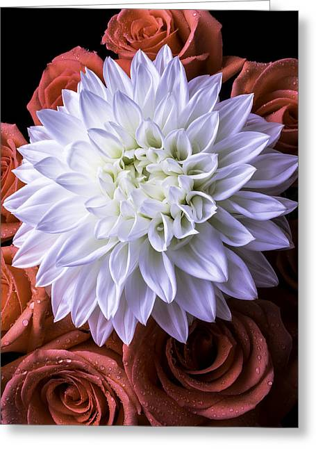 White Photographs Greeting Cards - White Dahlia And Red Roses Greeting Card by Garry Gay