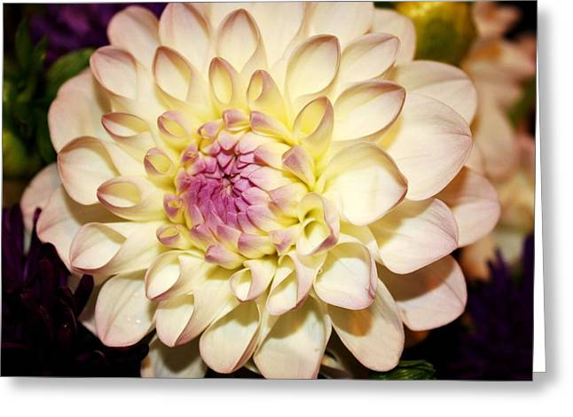 Decor Photography Greeting Cards - White Dahlia Greeting Card by Cathie Tyler