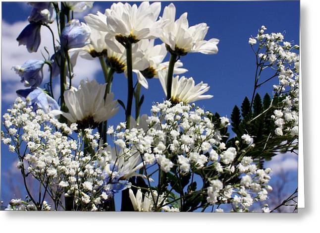 Babies Breath Greeting Cards - White Daisy Blue Sky Greeting Card by Marjorie Imbeau