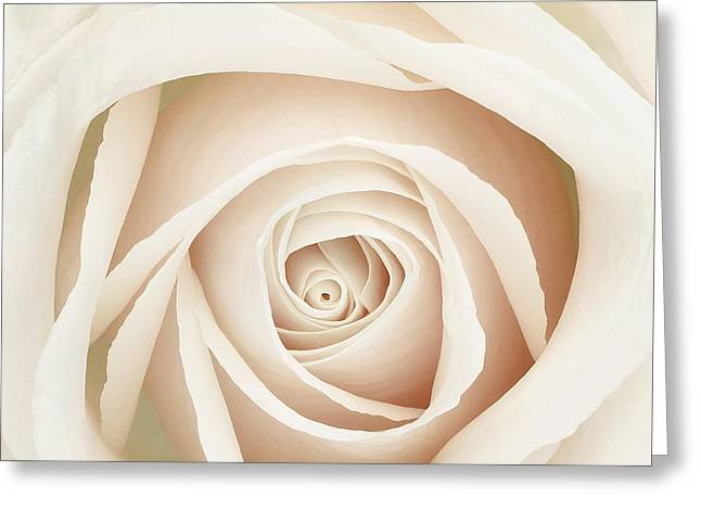 Rose Portrait Greeting Cards - White Dawn Rose Greeting Card by Mindy Sommers