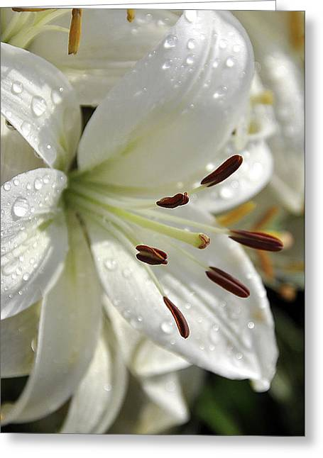 Dew Covered Flower Greeting Cards - White Day Lily I 2008 Greeting Card by Frank LaFerriere