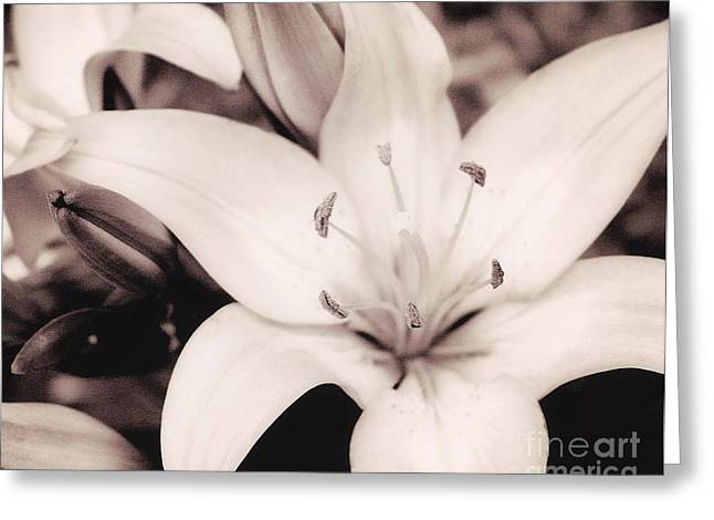 Day Lily Greeting Cards - White Day Lily Greeting Card by Mindy Sommers