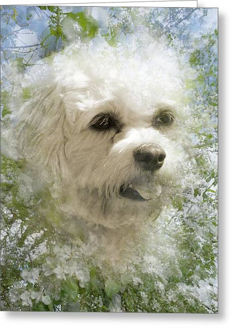 Dogs Digital Greeting Cards - White Dog In Bluebells Greeting Card by Beatrice Myers