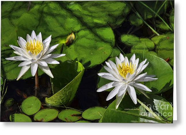 Lilly Pad Greeting Cards - White Duo Greeting Card by Deborah Benoit