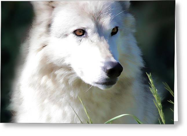 Puppies Greeting Cards - White Fang IV Greeting Card by Athena Mckinzie