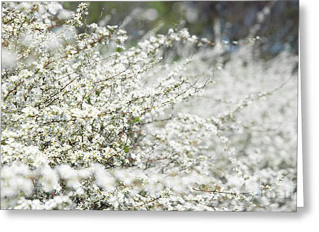 On Demand Greeting Cards - White Flowers Abstract Greeting Card by Anahi DeCanio - ArtyZen Studios