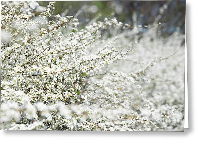 Award Digital Greeting Cards - White Flowers Abstract Greeting Card by Anahi DeCanio - ArtyZen Studios