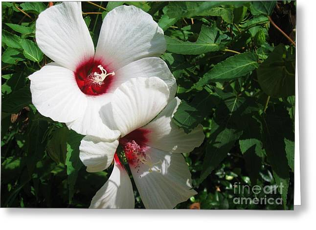 Flower Still Life Prints Greeting Cards - White Flowers Greeting Card by Venus
