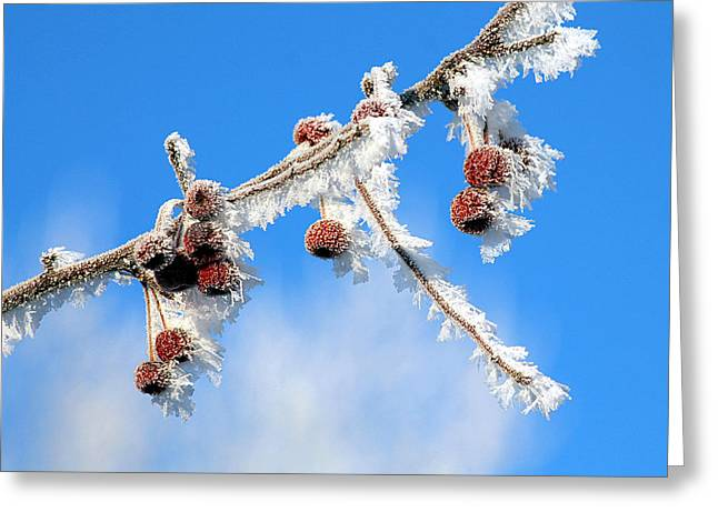 Berry Greeting Cards - White frost Greeting Card by Ekaterina Torganskaia