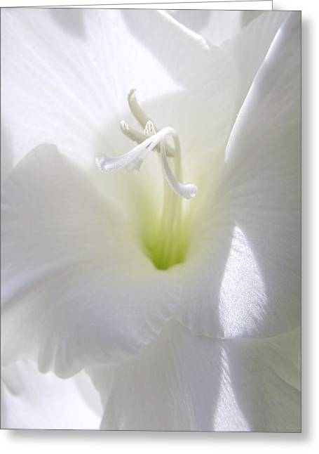 White Gladiola Flower Macro Greeting Card by Jennie Marie Schell