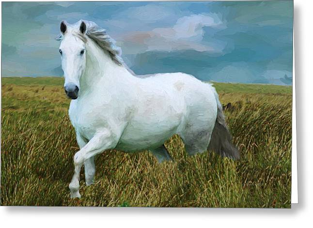 Race Horse Greeting Cards - White Horse Greeting Card by EricaMaxine  Price