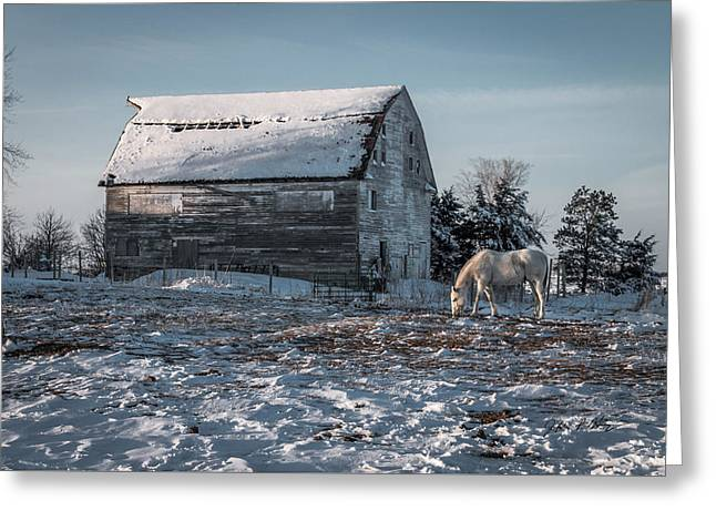 Lone Horse Greeting Cards - White Horse in Snow Greeting Card by Jeffrey Henry