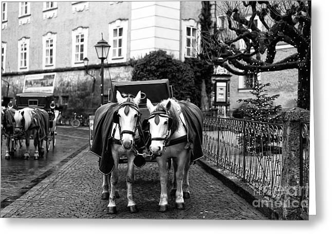 Salzburg Greeting Cards - White Horses in Salzburg Greeting Card by John Rizzuto