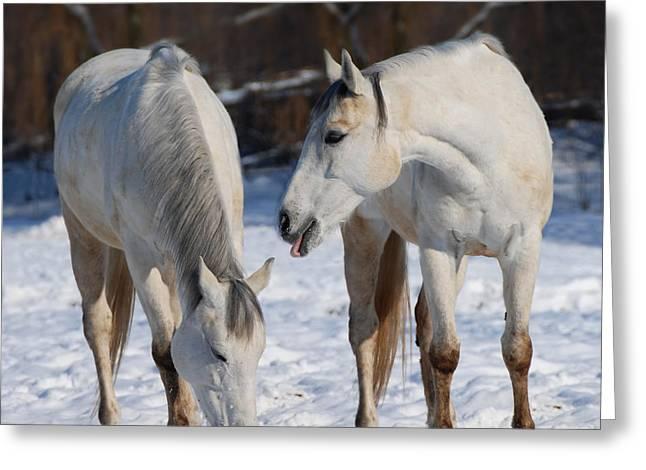 Dressage Photographs Greeting Cards - White Horses Greeting Card by  Jaroslaw Grudzinski