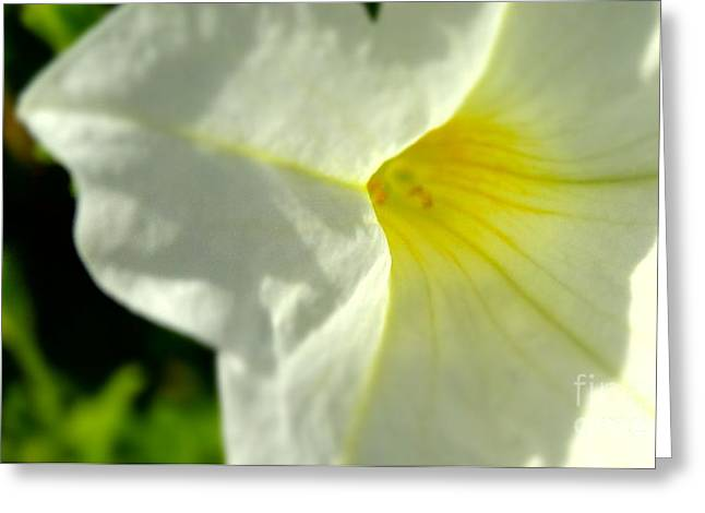 Storm Prints Greeting Cards - White Hush Greeting Card by Justin Moore