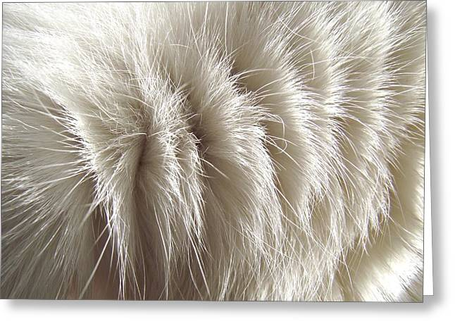 Ying Greeting Cards - White Kitty Fur Greeting Card by Paula  Heffel