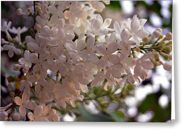 Van Gogh Style Greeting Cards - White Lilac Greeting Card by Lana Art