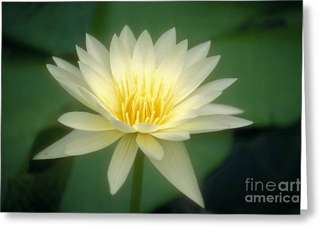 Nature Center Pond Greeting Cards - White Lily Greeting Card by Ron Dahlquist - Printscapes