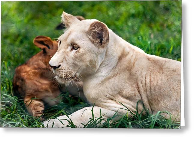White Lion Cub Greeting Card by Jenny Rainbow