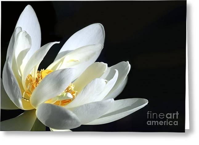 Lotus Seed Pod Greeting Cards - White Lotus Greeting Card by Sabrina L Ryan