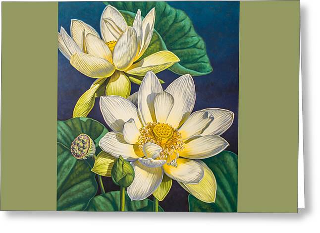 Aquatic Greeting Cards - White Lotuses 1 Greeting Card by Fiona Craig