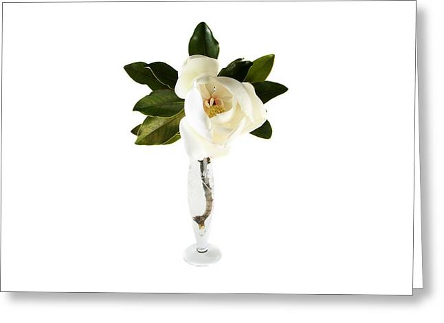 Romanticism Greeting Cards - White Magnolia Flower And Leaves Isolated On White  Greeting Card by Michael Ledray
