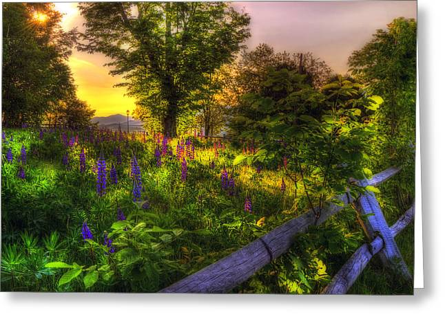 Scenic Greeting Cards - White Mountain Sunrise over Lupines Greeting Card by Joann Vitali