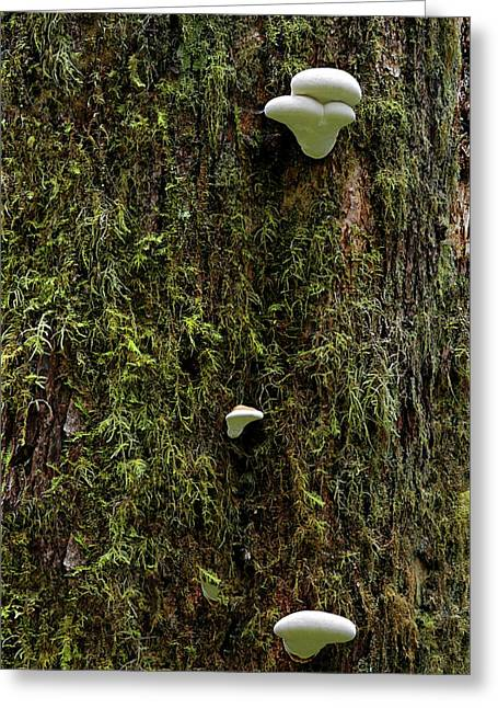 Rainforest Greeting Cards - White Mushrooms - Quinault temperate rain forest - Olympic Peninsula WA Greeting Card by Christine Till