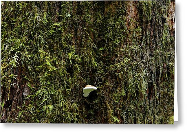 White Mushrooms - Quinault temperate rain forest - Olympic Peninsula WA Greeting Card by Christine Till
