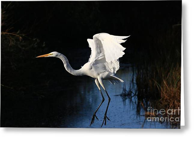 Hunting Bird Greeting Cards - White Never Looked So Good Greeting Card by Craig Corwin