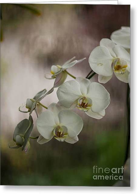 White Of The Evening Greeting Card by Mike Reid