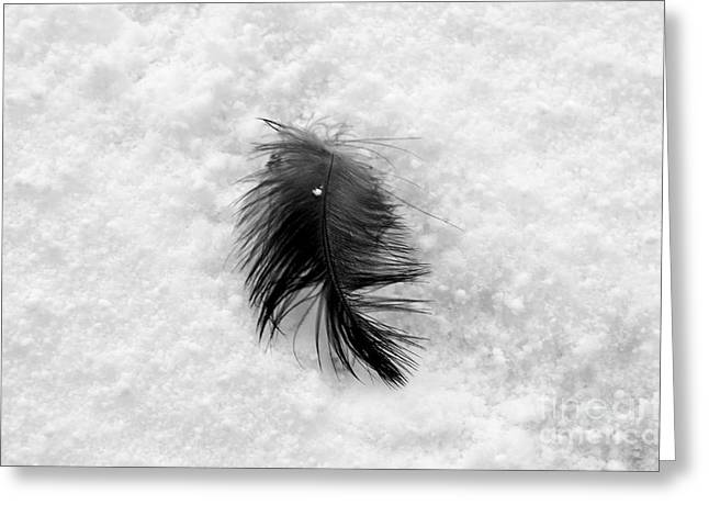 Winterscape Greeting Cards - White on Black and White Greeting Card by Dean Harte