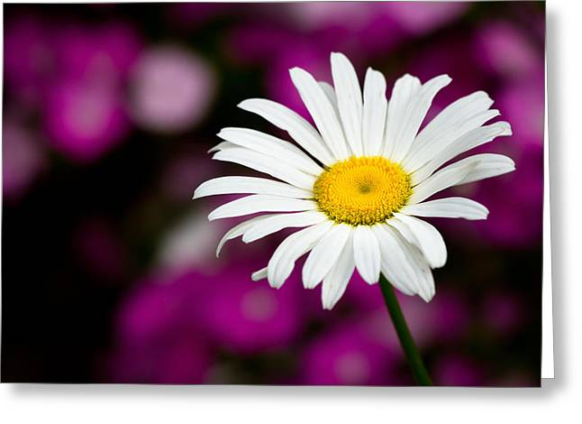 Jason Smith Greeting Cards - White on Pink Greeting Card by Jason Smith