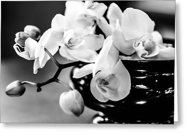 White Pyrography Greeting Cards - White Orchid 1 Greeting Card by Olga Photography
