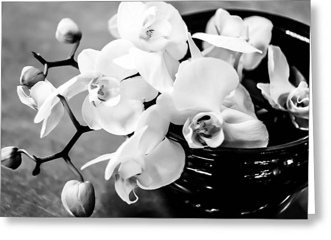 White Pyrography Greeting Cards - White Orchid 2 Greeting Card by Olga Photography