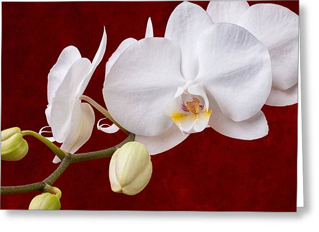 White Orchid Closeup Greeting Card by Tom Mc Nemar