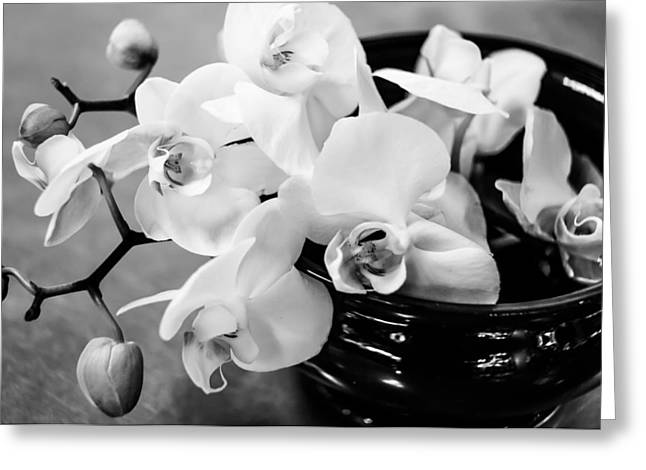White Pyrography Greeting Cards - White Orchid Greeting Card by Olga Photography