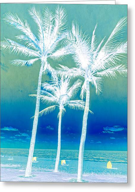 Cabanas Greeting Cards - White Palms Greeting Card by Debra and Dave Vanderlaan