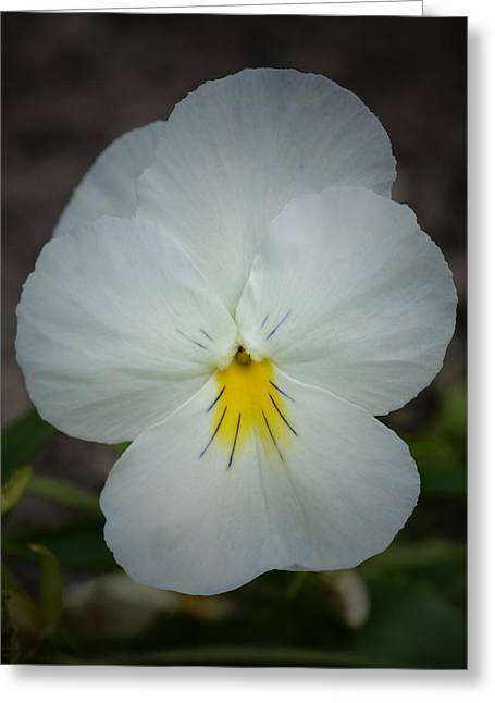 Floral Digital Art Greeting Cards - White Pansy Greeting Card by Richard Andrews
