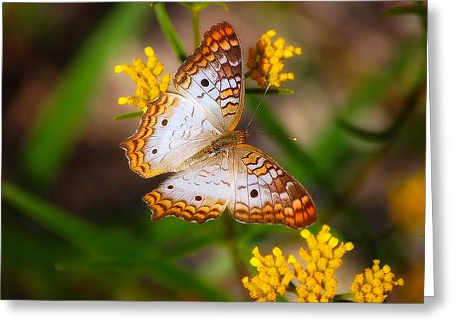 Orange Wildflower Greeting Cards - White Peacock Butterfly Greeting Card by Rich Leighton
