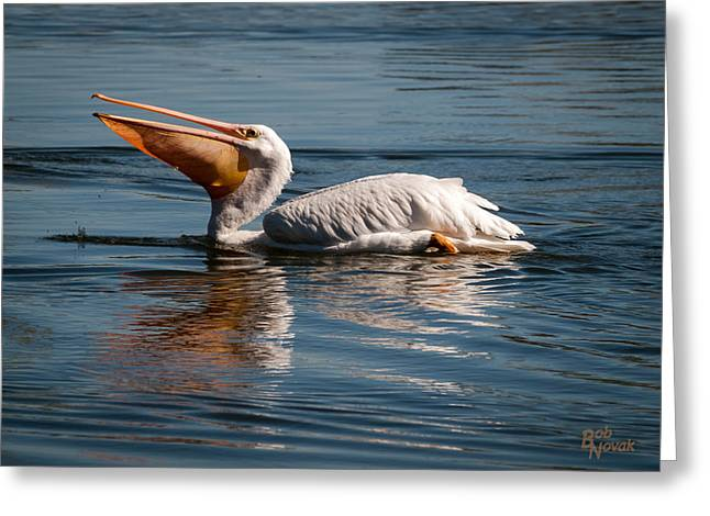 Wildlife Refuge. Pyrography Greeting Cards - White Pelican - - Greeting Card by Bob Novak