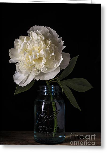 Canning Jar Greeting Cards - White Peony Flower Greeting Card by Edward Fielding