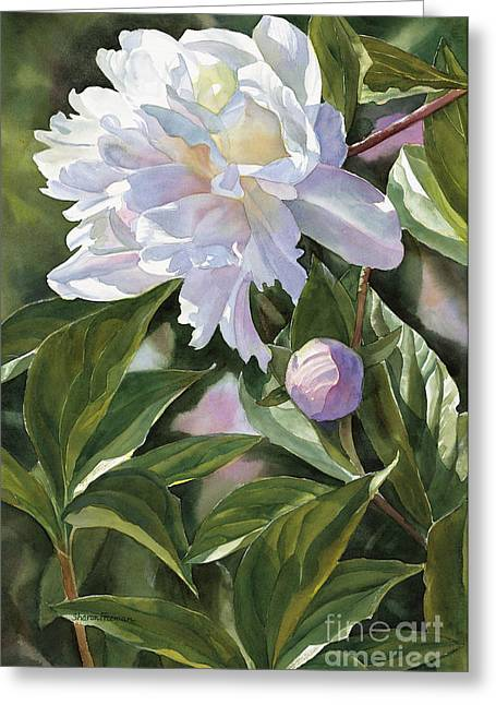 Peony Art Greeting Cards - White Peony with Bud Greeting Card by Sharon Freeman